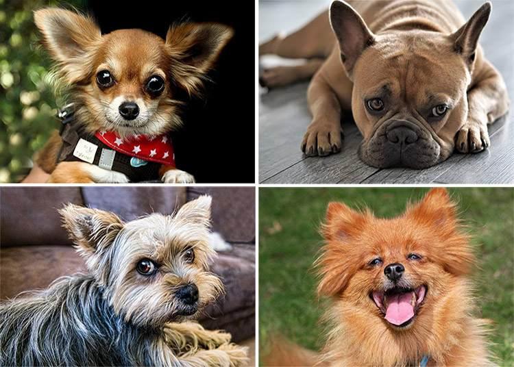 psy ciekawostki pies śmieszne psy uśmiech zadowolenie oczy