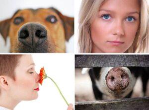 nos ciekawostki zapach węch nosy
