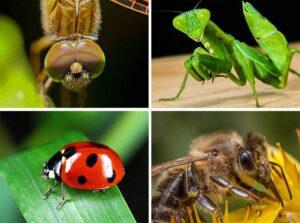 owady ciekawostki o owadach informacje owad
