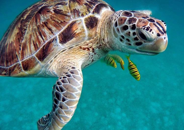 żółw morski wodny ciekawostki żółwie wodne
