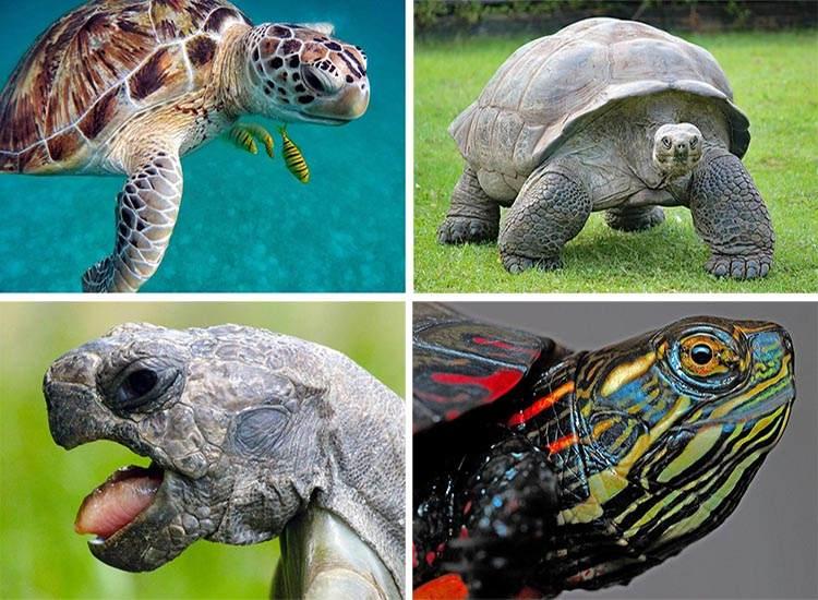 żółwie ciekawostki o żółwiach gady
