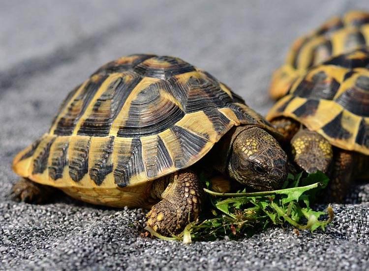 żółwie ciekawostki pożywienie pokarm jedzenie