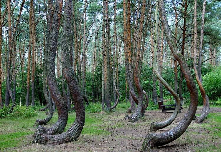 Krzywy Las Trzęsacz województwo-zachodniopomorskie ciekawostki