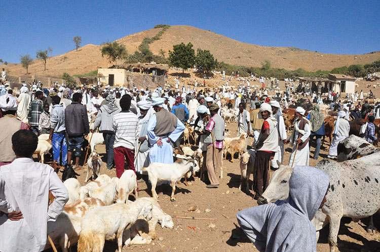 targ zwierzęta Erytrea Afryka
