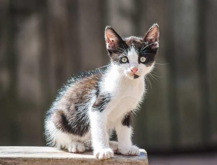 imię dla kota zwierzaki imiona