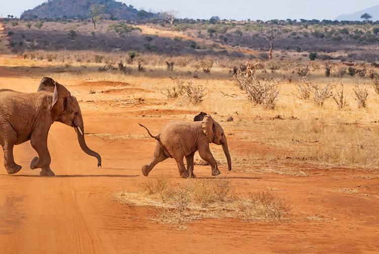 ciekawostki Kenia safari w Kenii Afryka